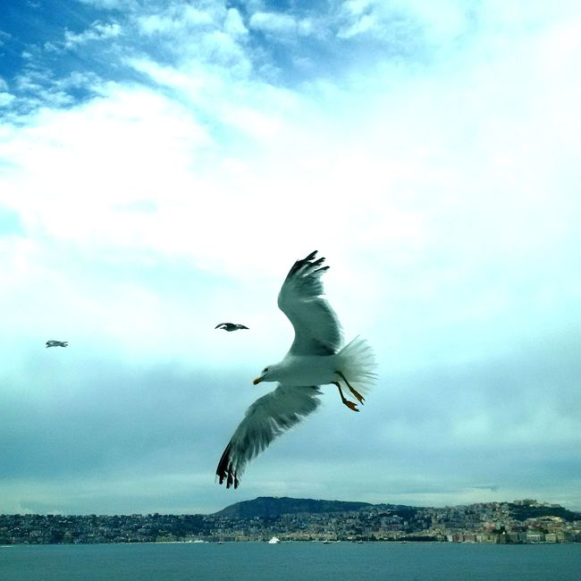 Flying Bird Animals In The Wild Motion Spread Wings Animal Wildlife Nature Day Beauty In Nature Animal Themes Sky Seagull Seagulls In Flight Adaptedtothecity Seagull At The Sea Cruising Cruise Ship Photos Naples, Italy Adapted To The City Animals