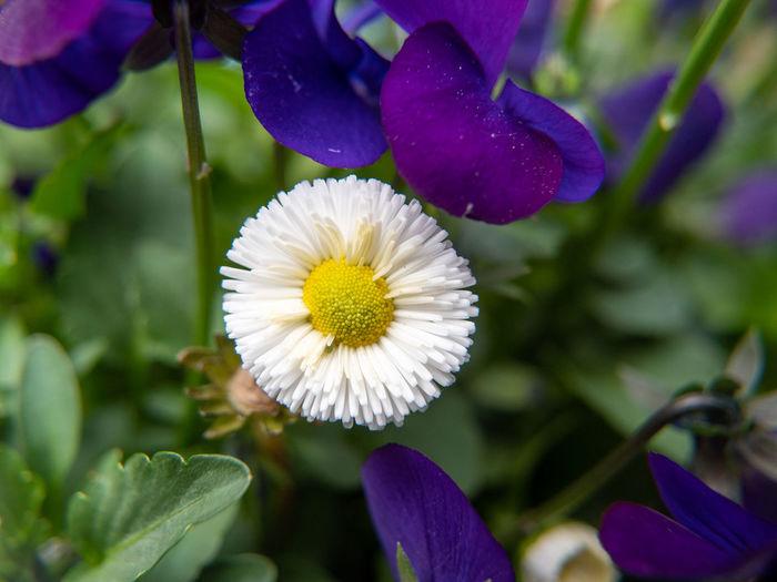 Purple Focus On