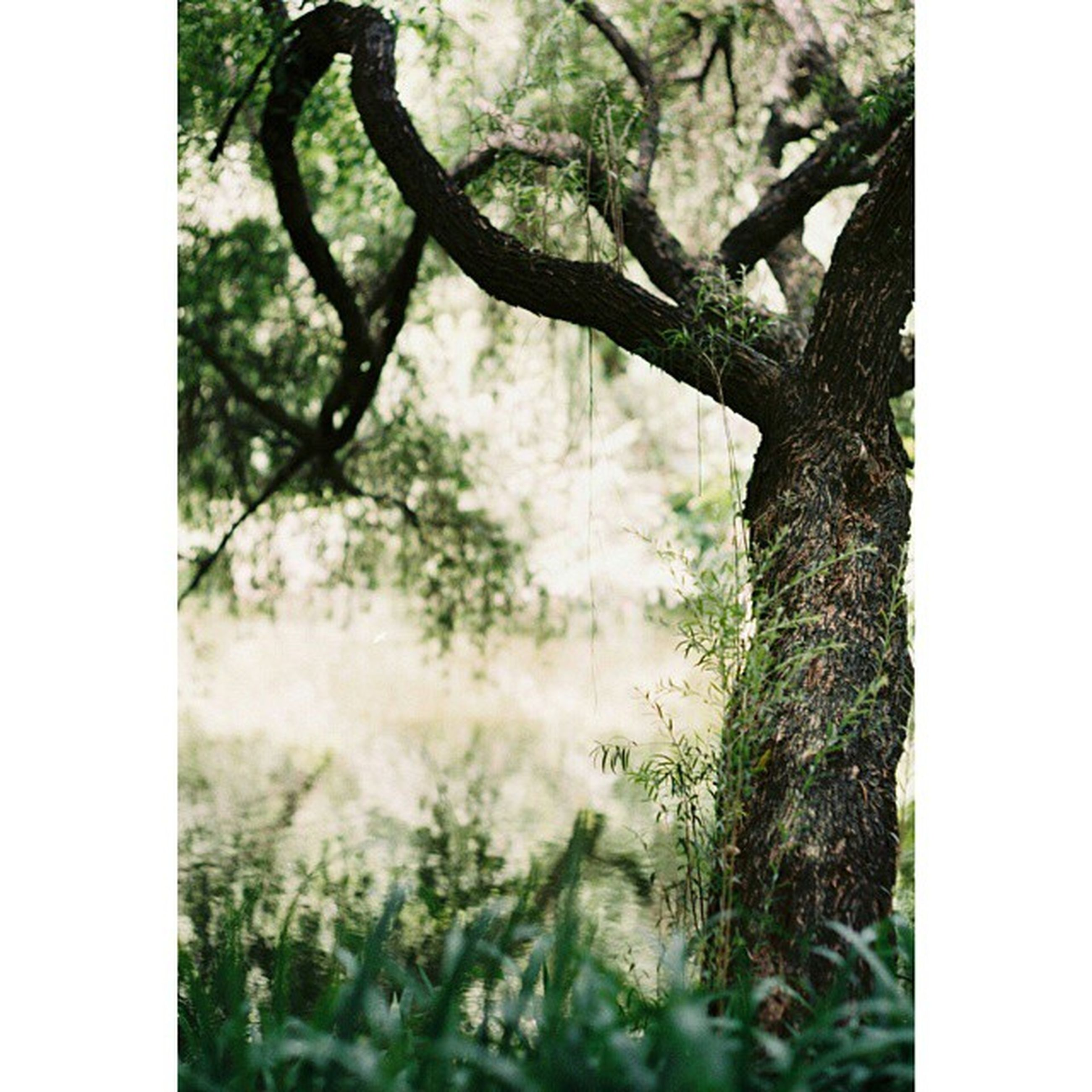 transfer print, auto post production filter, tree, growth, nature, branch, forest, tranquility, tree trunk, beauty in nature, plant, day, outdoors, no people, selective focus, close-up, tranquil scene, focus on foreground, field, scenics