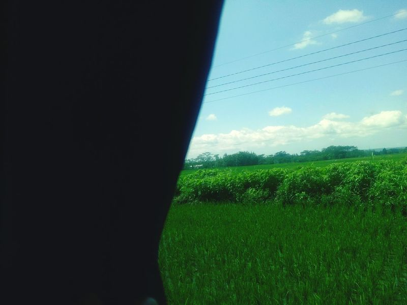 world outside the window Colour Your Horizn Ricefield Rice Paddy Ricefield View Agriculture Field Green Color Sky Cloud - Sky Grass Nature No People Water Day Beauty In Nature Outdoors Freshness Tree Growth EyeEmNewHere