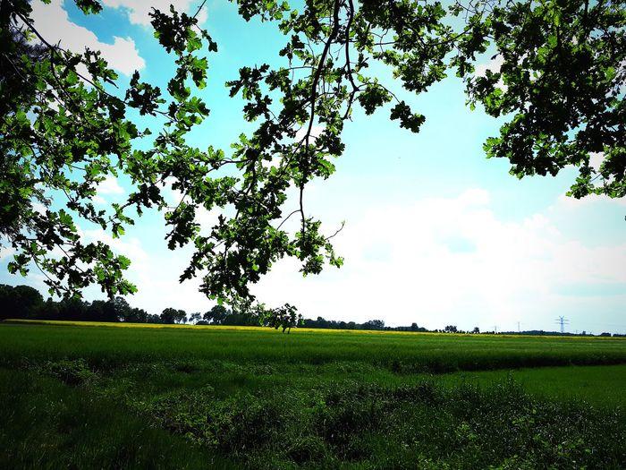 Tea Crop Rural Scene Cereal Plant Rice Paddy Irrigation Equipment Crop  Farm