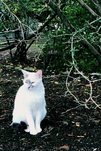 Cat Domestic Cat Feline Pets Domestic Domestic Animals One Animal White Color No People Tree Looking
