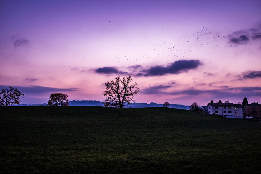 Sky Environment Cloud - Sky Sunset Beauty In Nature Architecture Built Structure Building Exterior Silhouette Plant Scenics - Nature Landscape Land Field Tranquil Scene Tree Nature Tranquility Dusk No People Purple Outdoors Flock Of Birds