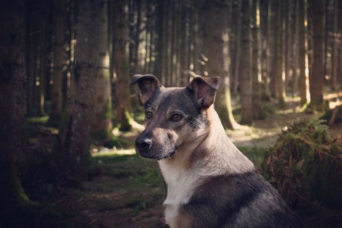 🌲🐕☀️ One Animal No People Forest Portrait Looking At Camera Nature Outdoors Tree Pets Dog Sunlight And Shadow Naturelovers Photography Mood Hike Beauty Freedom Adventure Hikingadventures Tranquility Sunlight Puppy Rescuedog Puppy Love Light And Shadow