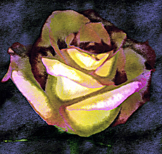 Scanned Rose Watercolor: Digital photogram created by scanning a rose manipulated to appear as a watercolor. Abstract, Scanned Rose, Digital Graphics, Digital Photogram Alternative Photography Concept Creative Photography Image Manipulation, Rose, Scanner Ingenuity New Age Photo Realism Watercolor Effect