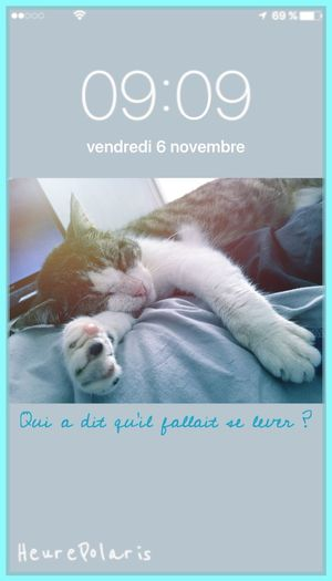 09H09 😽Qui a dit qu'il fallait se lever ? 😴 HEURE POLARIS Mon Ami Le Chat Time Heure Hour Matin Dormir Hello World Chat Cat Cat♡ Animal Bonjour Animal Photography