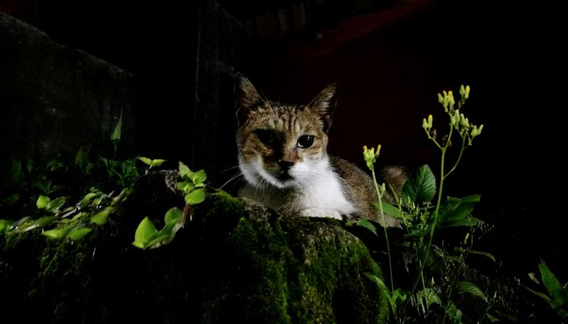 Cat Watching Cat Catstagram Night Cat Up Close Street Photography Night View Nightlife Animal Themes 貓 Katze The Great Outdoors With Adobe The Wizard Of Oz 街貓 Domestic Cat Cities At Night Always Be Cozy Pet Portraits