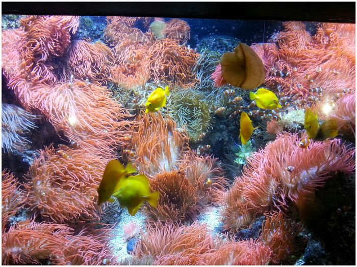 Coral Reef Acquario Di Genova Multi Colored Underwater Swimming Through The Window Water No People Sea Life Animal Themes Indoors  UnderSea Smartphone Photography Note 2