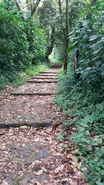 Nature Day Outdoors Forest Forest Photography Landscape Travelphotography Travel Planetapordescubrir Cameroon Africa Scenics Beauty In Nature Rural Scene Nature Green Color Stairs_collection Stairs To... Stairs In Nature Stairs