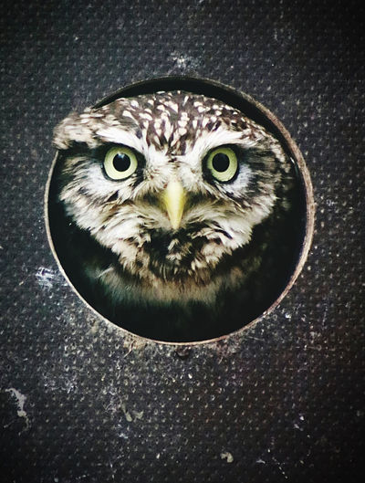 High angle view of owl