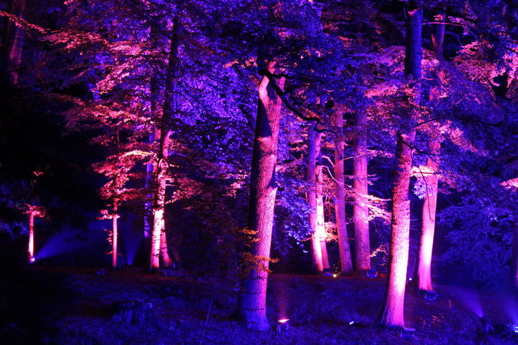 Beauty In Nature Dark Darkness And Light EyeEm Gallery EyeEm Illuminated EyeEm Nature Lover Illuminated Learn & Shoot: After Dark Lichtspiele Light Night Nightphotography Non-urban Scene Outdoors Poesie Des Lichts Schloss Dyck Tranquil Scene Tree Tree TreePorn Vibrant Color WoodLand