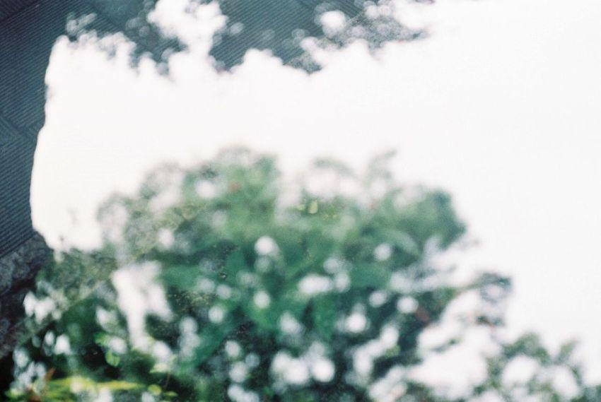 涙で目の前が曇った。 Film Photography Film Filmphoto Filmcamera Rain Rainy Days 雨 水溜り 玉ボケ Konicaiib