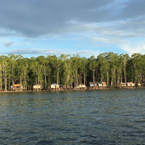 Mangrove Papua Timika Asmat Explore INDONESIA