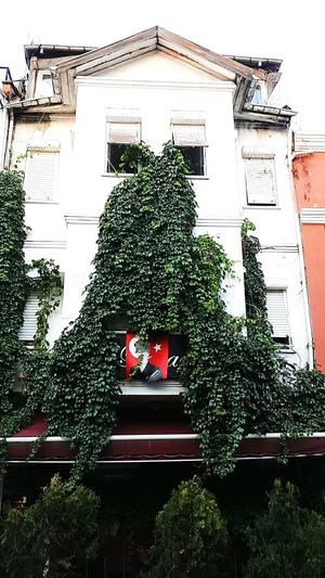 Old Buildings Old Ivy Covered Ivy Plant Atatürk Redwhite