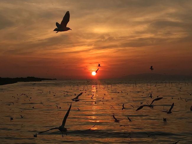 Sunset Silhouette Bird Nature Sea Beauty In Nature Flying Water Animals In The Wild Horizon Over Water Cloud - Sky Sun