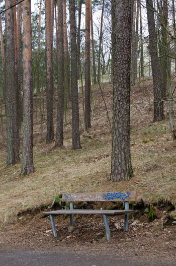Bench in the woods Absence Autumn Bench Conifers Day Finland Footpath Forest Grass Green Color Nature No People Outdoors Park Pinetrees Scandinavia Tags The Way Forward Tranquility Tree Tree Trunk Wood Wood WoodLand