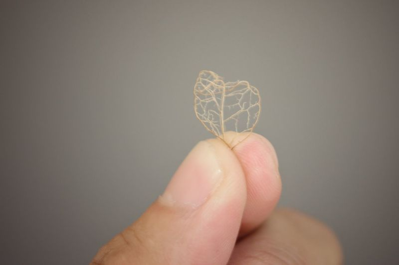 Close-up of hand holding dry leaf over beige background