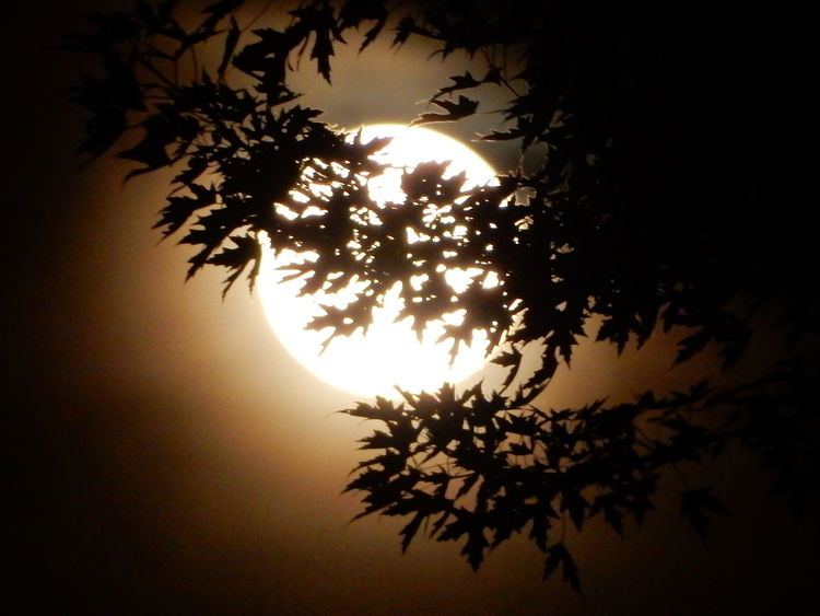 #EyeEmNatureAwardWorthy Beauty In Nature Close-up Connected By Nature Connection Dark Glowing Gorgeous Colors Idyllic JustJennifer@TruthIsBeauty Low Angle View No People Orange Color Outdoors Silhouette Sky Solstice Strawberry Moon Strawberry Moon 2016 Summer 2016 Tranquil Scene Tranquility Tree TruthIsBeauty Photographic Art 🌷 TruthIsBeauty 💯