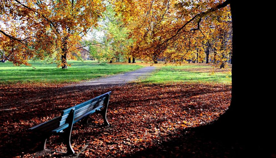Entspannen im Park. Relaxing in the Park Check This Out Relaxing Enjoying Life Taking Photos Hello World Auutumn Colors Orange Orange Color Tree Trees City Life Nature Naturelovers Nature_collection Nature Photography Nice Day Parks That's Me At Home Relax Chilling