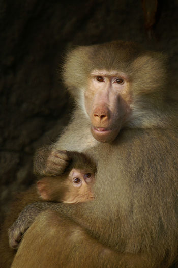 Primate Group