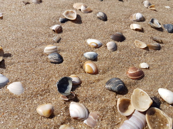 Beach Beauty In Nature Close-up Colorful Day Extreme Close Up Full Frame Geology Group Of Objects Nature EyeEm Diversity No People Outdoors Sand Sand & Sea Seashell Seashells Shell Shells Perspectives On Nature Summer Tranquil Scene Tranquility Maximum Closeness Vacations