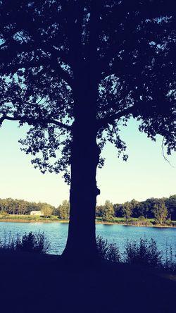 Ekmek gibi, Rüzgar gibi, su gibi, hava gibi, avuçları fesleğen kokulu bir yâri sevmek lazım... elleri haramlara değen değil çiçeklere değen bir yâr ... şiirgecede literature trees EyeEm Nature Lover EyeEm Best Shots