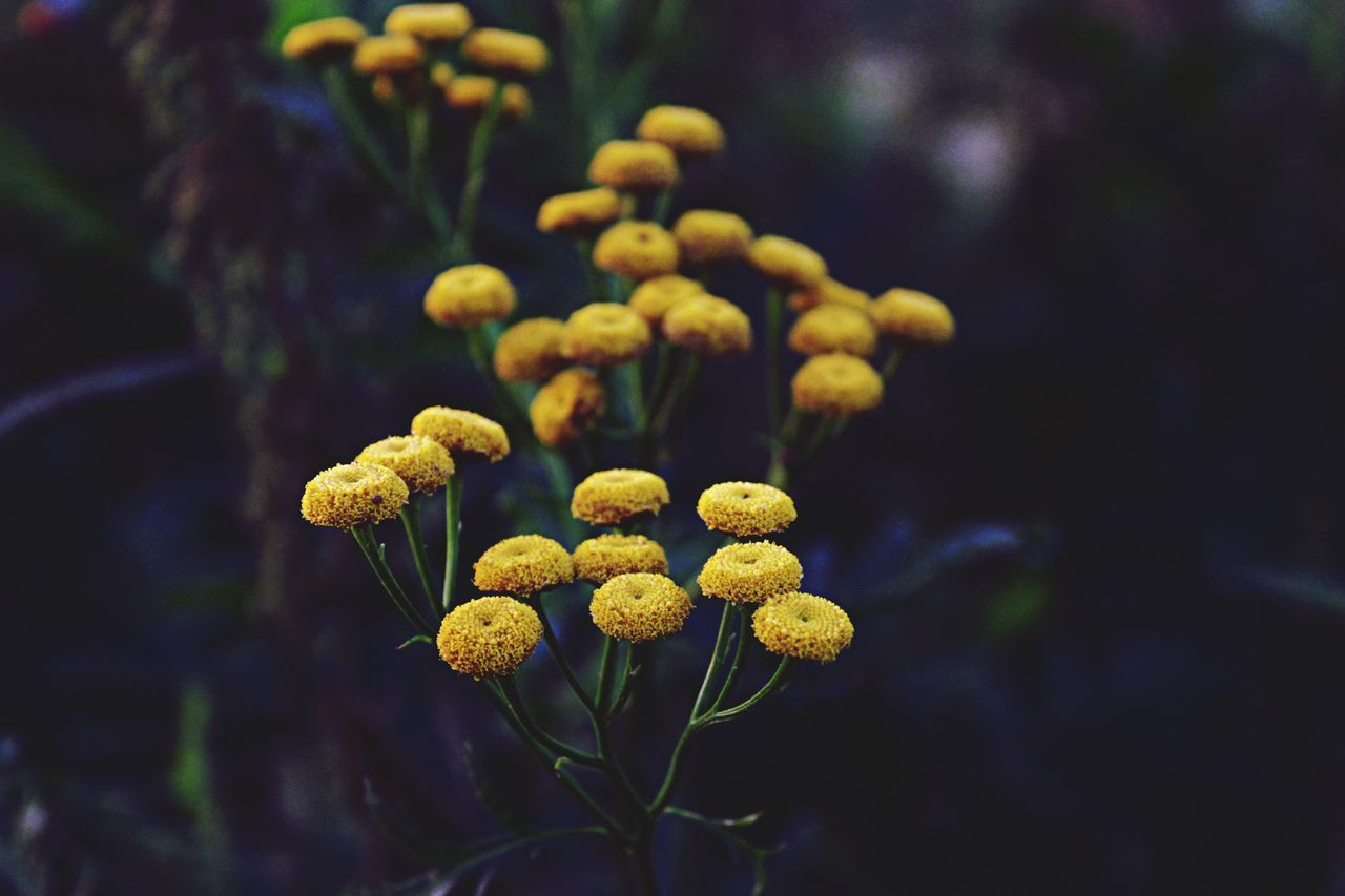Beautiful Yellow Flowers Blooming Outdoors
