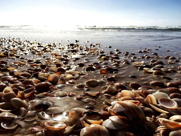 Shells on wet shore against sky