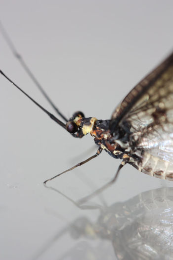Animal Themes Beauty In Nature Close Close Up Close-up Closeup Creepy Day Dragon Dragonflies Dragonfly Dragons EyeEm Best Shots Fear First Eyeem Photo Glass Insect Insects  Mirror Monster Nature Nature No People Symmetry Wings