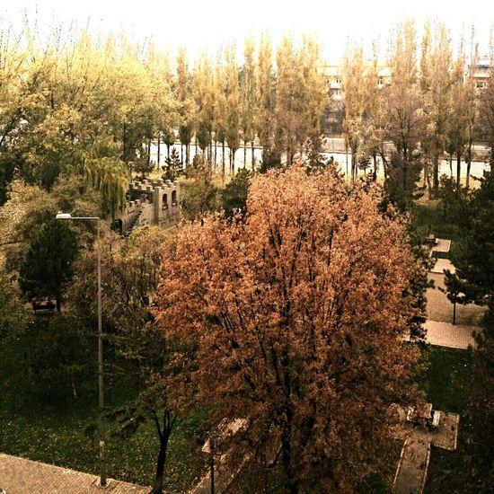 Fall Park Trees Yellow