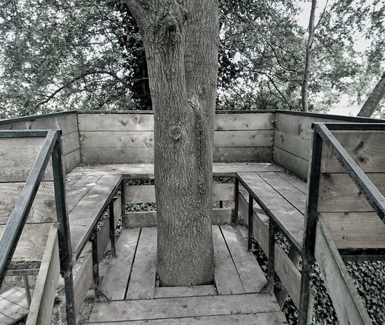 Tree House // Day Railing Steps And Staircases No People Steps Outdoors Architecture Built Structure Tree Tree Tree House Nature Nature_collection Nature Photography Naturelovers Blackandwhite Black And White Black & White EyeEm Best Shots EyeEm Best Edits EyeEmBestPics Photography Rural Scene Sunlight Tranquility