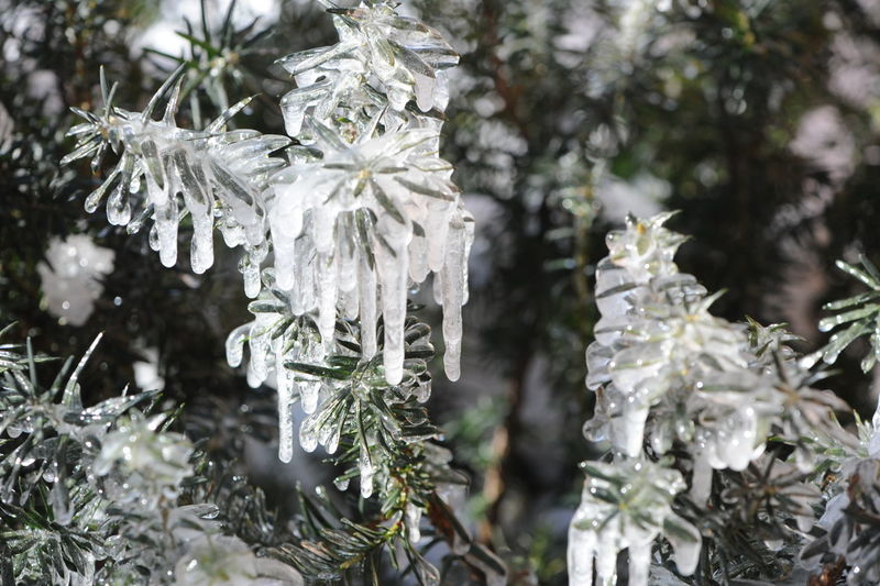 It's freezing out here. Beauty In Nature Branch Branches In Winter Close-up Cold Temperature Day Focus On Foreground Frozen Branches Growth Ice Storm Leaf Nature Outdoors Plant Snow Tree White Color
