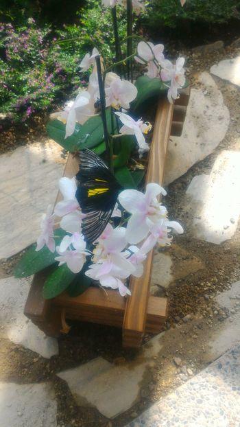 Flower Nature Konya Türkiye Kelebeklervadisi Kelebek Butterfly Botany
