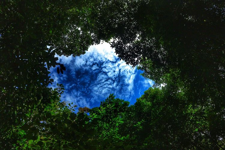 Nature Tree Blue Growth Beauty In Nature Sky Outdoors Forest Day No People Scenics