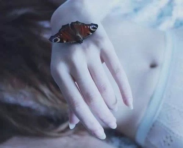 Pale Photography Butterfly Body