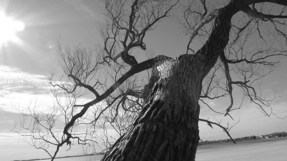 Blackandwhite Photography Leaning Trees Cool Angle Hanging Out Lake Cadillac Pure Michigan