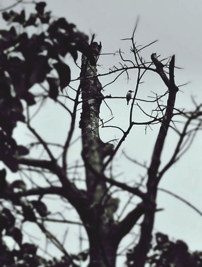 Bird In A Bush Birds_n_branches Respect For The Good Taste Taking Photo Hello World EyeEm Somethingdifferent