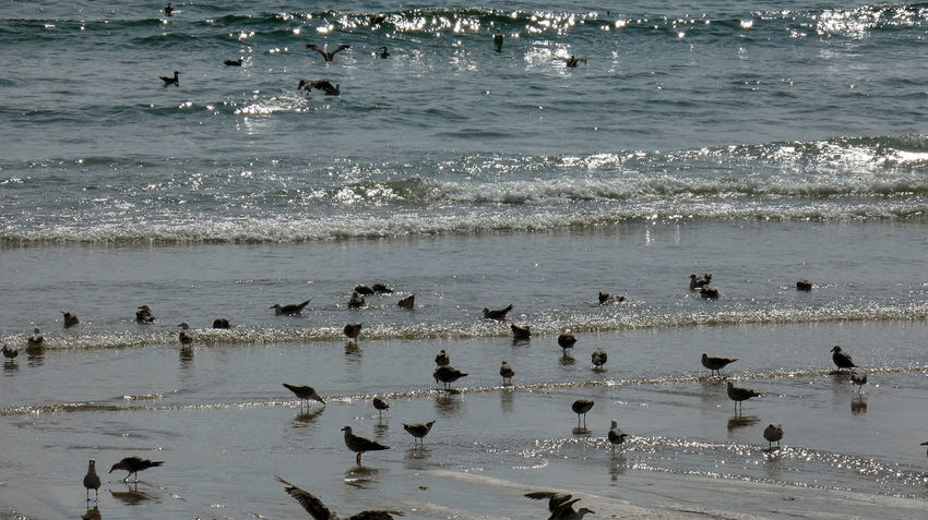 Seagulls trying to refresh in this heat. Nature Refreshment Seagulls Animal Animal Themes Animal Wildlife Animals In The Wild Beach Beauty In Nature Bird Day Flock Of Birds Group Of Animals Land Large Group Of Animals Motion Nature No People Ocean Outdoors Sea Seagull Vertebrate Water Wave