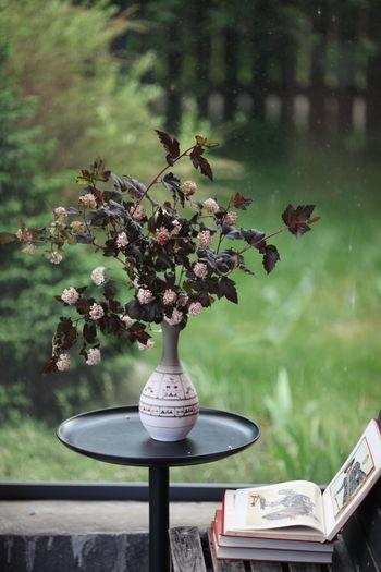 Bouquet Summertime Summer ☀ Summer Views Nature Naturemorte Flower Tree Flower Head Branch Book Vase Table Close-up Plant Apple Blossom Pistil Botany Plant Life In Bloom Blooming Pollen Stamen Twig Blossom