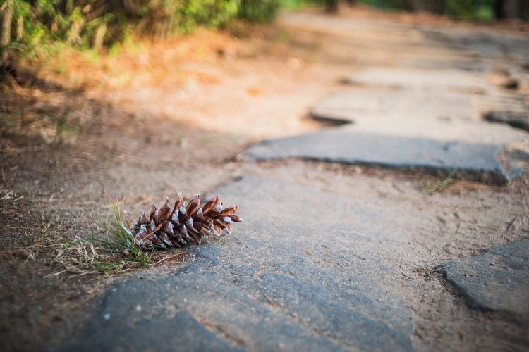 Fine Cone Selective Focus Zoology Focus On Foreground Crawling Outdoors Nature Day Invertebrate Fragility Tranquility Dirt Track Non-urban Scene