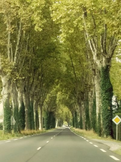 Road The Way Forward Transportation Street Green Color Tree Outdoors No People Day Nature Road Sign Field Agriculture Scenics Beauty In Nature Nature City Grass Sky Rural Scene Tree Parallel Landscape Diminishing Perspective Freshness Paint The Town Yellow Lost In The Landscape