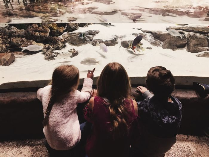 High angle view of friends looking at fish in aquarium