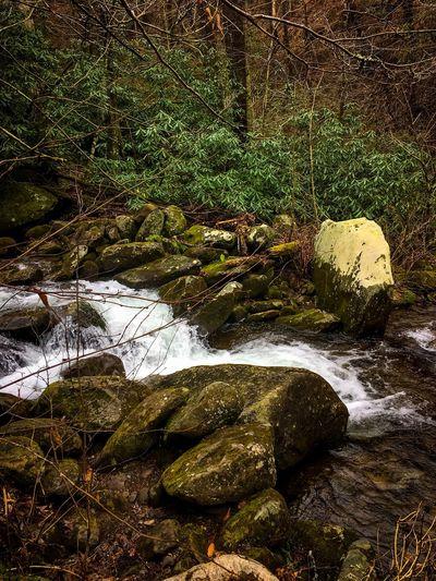 Creek 2 Kendall