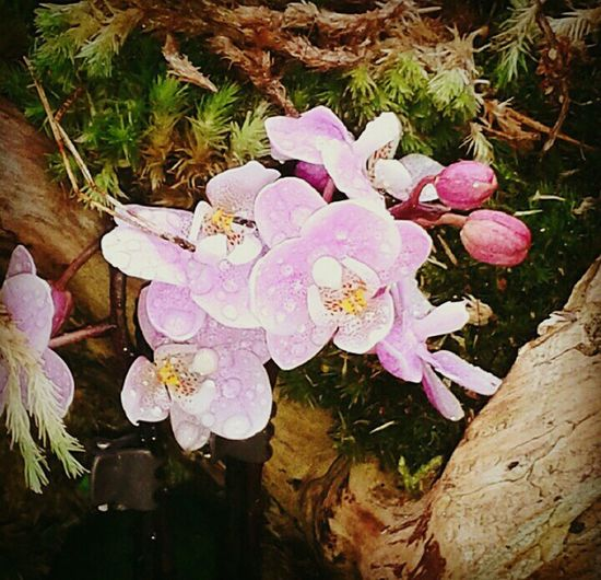Orquideas Photography Sintra Beauty EyeEm Nature Lover