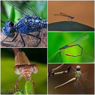 ----- Repost ----- So many thank you @ig_dragonflies for featuring my photo ( TL ) im so honored, keep tagging Ig_dragonflies for your chance to be featured