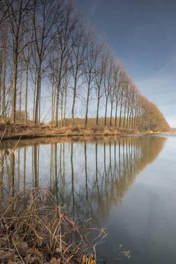 Reconstruction of 'Staats Spaanse linies' (a system of military lines of defense original from the 80-year Dutch Spanish war 1568-1648). This site is south of Axel (near Nieuwe Molen) EyeEm Market © EyeEm Premium Collection Reflection Water Tranquil Scene Waterfront Tree Line Perspective Creek Sony A77ii Zeeuws Vlaanderen Zeeland  The Netherlands Staats Spaanse Line