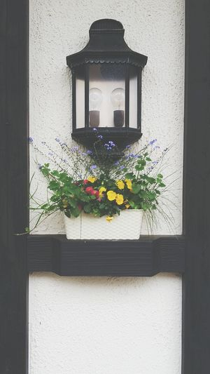Flower No People Outdoors Plant Nature Window Box Front View Lamp Germany Deutschland Blumen Pflanzen Hauswand Lampe