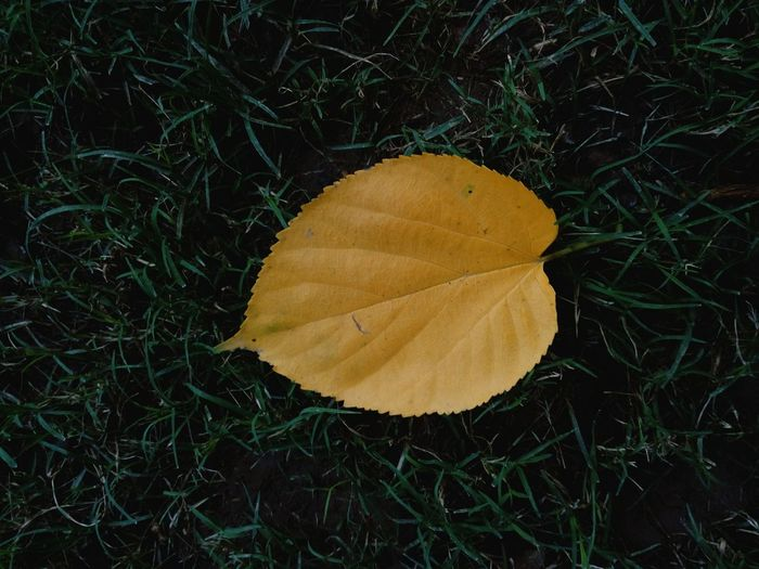 Yellow Grass Green SSClicks SSClickPics Close-up Leaf Fallen On Ground Colours Of Nature Colours Of Life