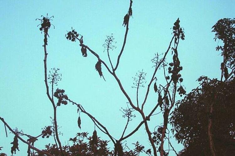 🌲🌲🍃 Foto Fotografia Canon Lente Efeito Céu Sky Momento Instaphoto Instabrasil