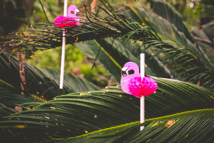 Flamingo Beauty In Nature Close-up Decoration Focus On Foreground Fragility Freshness Green Color Growth Leaf Nature No People Outdoors Pink Color Plant Plant Part Purple Vulnerability  The Still Life Photographer - 2018 EyeEm Awards
